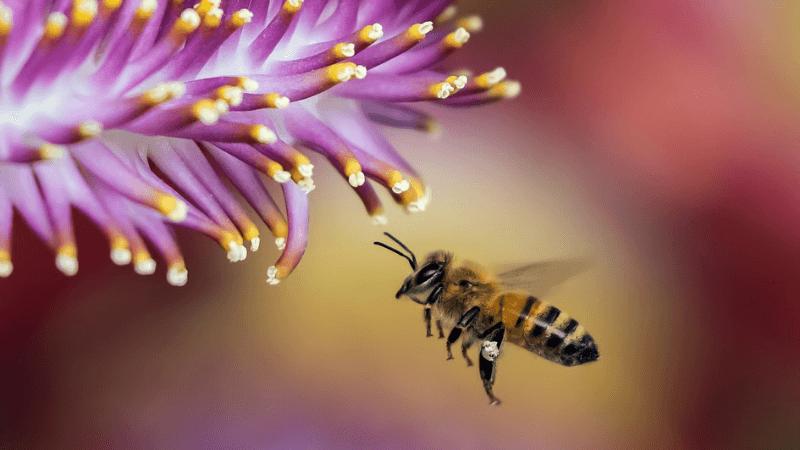 Vedecké štúdie potvrdzujúce účinnosť homeopatík 2 časť