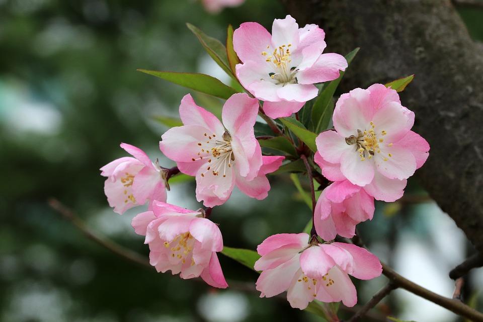 jarná kvetina